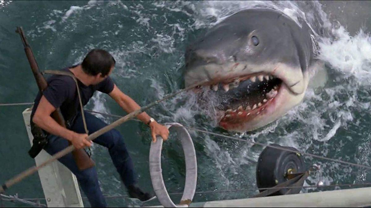tubarão reprod